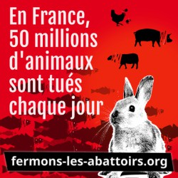 "Sticker ""En France 50 M - lapin"""