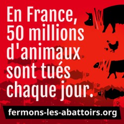 "Sticker ""En France 50 M d'animaux - animaux"""