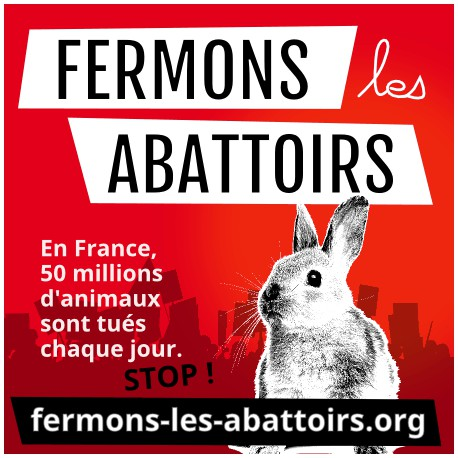 Fermons les abattoirs - lapin